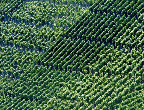 Weinbau-Factoring: Forderungen im Griff
