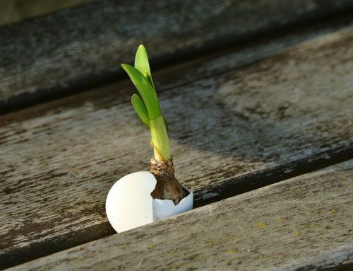 Wachstum für Ihr Unternehmen
