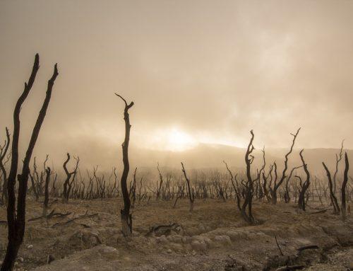Landwirtschaft: Dürre in der Kasse